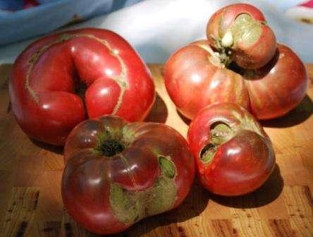 Любители натуральных домашних продуктов питания предпочитают народные методы для обработки томатов.</p> <p> Такие способы безопасные и достаточно эффективные. Вы можете выбрать для себя наиболее подходящий метод.» width=»444″ height=»336″/></p></div> </p> <ol> <li>Настой чеснока. Если провести опрыскивание таким настоем, то вы сможете уничтожить споры гриба. На 10 литров воды возьмите 1,5 стакана измельченного чеснока, можно вместе со стеблями. Сначала раствор настаивают, а потом добавляют в него 2 гр перманганата калия. Опрыскивают перед тем, как появляется завязь, а потом еще раз спустя 2 недели.</li> </ol> <p><div style=