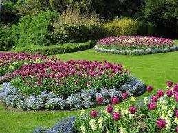 Если вас волнует вопрос: «Когда сажать тюльпаны?», то опытные цветоводы ответят, что осенью. Именно в этот период рекомендуется высаживать луковицы.