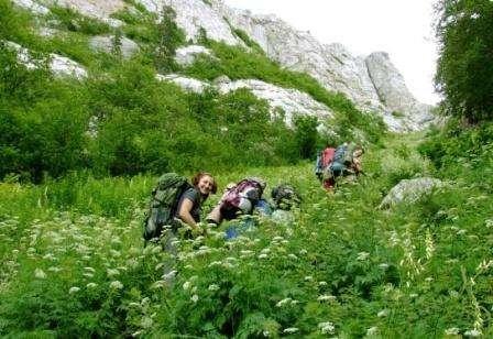 борщевик в горах