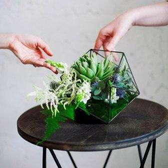 Флорариум из суккулентов своими руками как сделать