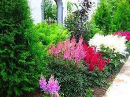 Помимо цветущих растений в цветнике должны быть лиственные зеленые растения – их задача придать пышности дополнительной декоративности. Особенно наличие таких растений будет значимо в период, когда не будет цветения.