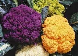 Цветная капуста: выращивание и уход в открытом грунте из семян и рассады