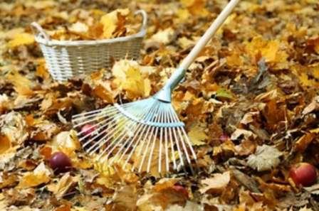 После того как вы провели основные мероприятия по уходу за яблоней осенью для увеличения урожая на будущий год, можете приступить