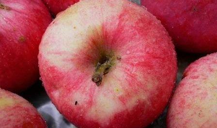 Яблука Мельба опис фото