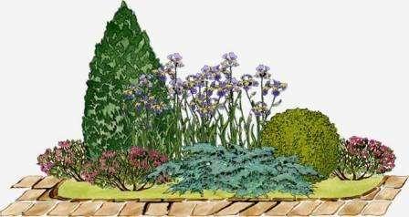 Перед началом высадки всех растений будущего миксбордера, необходимо составить подробный план-схему рассадки. Такой план вы можете нарисовать на обычной бумаге, использую цветные карандаши для разных видов растений. Н