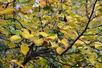Как ухаживать за яблоней осенью, чтобы был хороший урожай