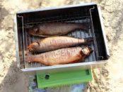Коптилки холодного копчения для рыбы своими руками