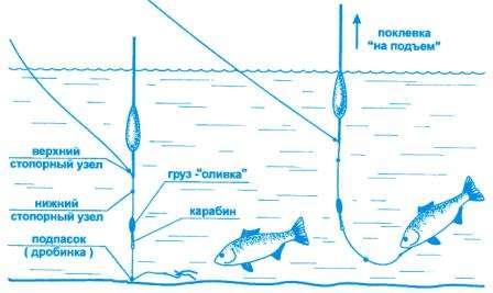 Начинающему рыбаку нужно знать повадки карася. По весне карась предпочитает обитать возле камышей, так как другой растительности на водоеме еще нет. Для начала ловли стоит выбрать достаточно участок, поросший камышом