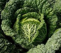 Скорее всего вы видели фото или встречали название этой капусты, которая отличается кудрявыми листьями с необычными выпуклостями. Савойская капуста не только достаточно красивая, но и при этом имеет богатый состав полезных веществ.
