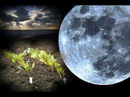Лунный посевной календарь на 2017 года садовода и огородника