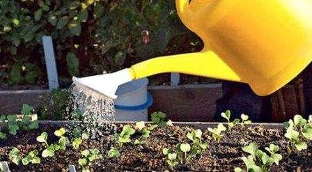 водой, а в дальнейшем редис также регулярно поливают. Помните, что во всем нужно знать меру. От застоя воды корнеплоды будут подгнивать и могут вовсе погибнуть. Опытные садоводы рекомендуют поливать посаженный в марте редис, то