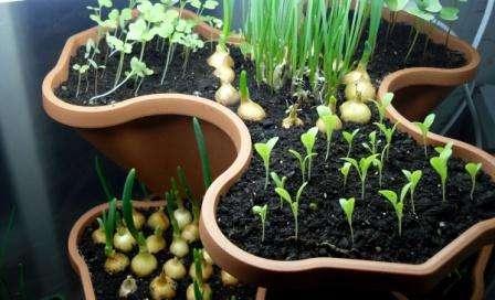 В первую очередь, в домашних условиях можно выращивать зелень. Она всегда уместна при приготовлении еды и подаче готовых блюд на стол. Помимо зелени, можно выращивать некоторые виды овощей, например, помидоры, огурцы и перец.