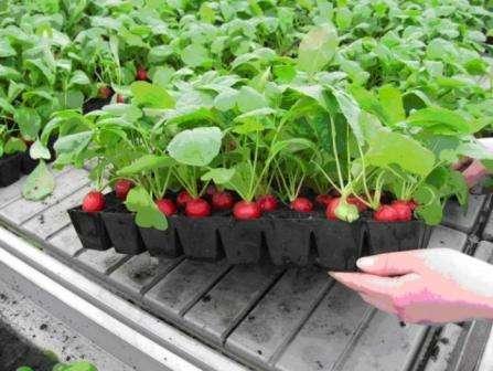 В первую очередь, необходимо определиться с тем, какие растения будут посажены на огороде. Исходя из этого, надо подобрать подходящую этим растениям землю и место в помещении. Землю могут помочь выбрать в цветочном магазине
