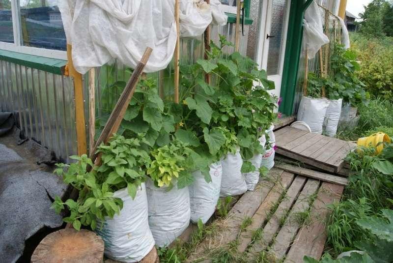 Перед тем как приступить к посадке семян, вам нужно подготовить мешки из полиэтилена или из-под сахара, объемом около 100 л. Кроме этого возьмите деревянную палку, вбейте в один конец гвоздь и намотайте леску. Э