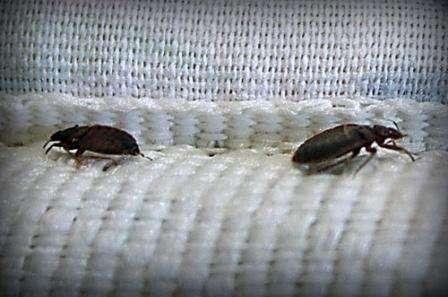 Кроме аэрозолей,  есть мелки и порошки инсектицидные, которые широко используются для обработки больших помещений от клопов. Самыми популярными считаются карандаш Машенька, Хлорофос и Неопин. Все