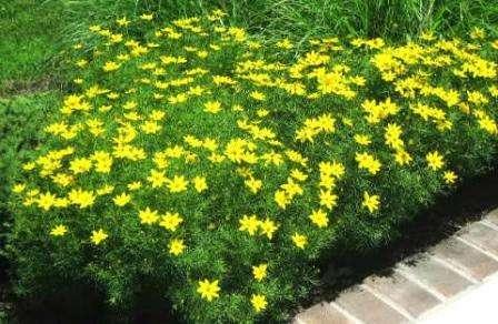 Цветы цветущие все лето фото и название