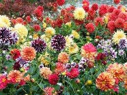 Чтобы защитить корни от перегрева в очень жаркое время вокруг растения землю накрывают картоном или дос