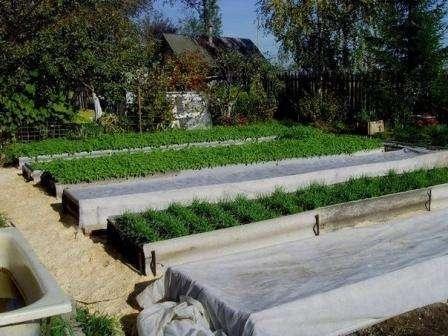 Именно эти растения дадут хороший урожай, пока еще в грядке минимальное выделение тепловой энергии. Второй год можно назвать самый эффективный в использовании теплой грядки, поэтому вы можете уже на