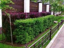 Уделите особое внимание озеленению участка, чтобы он красиво смотрелся не только в летнее, но и зимнее время. В
