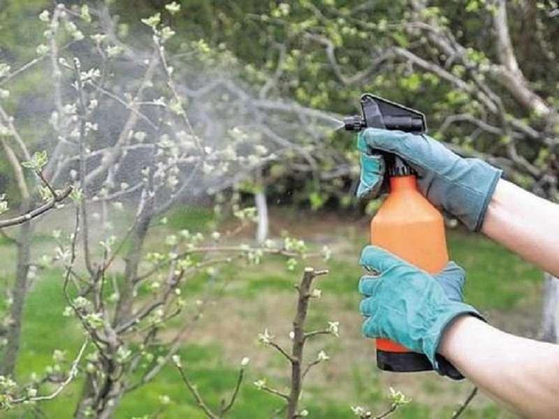 чем опрыскивать сад весной до распускания