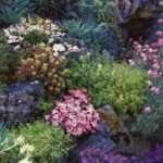 Цветы на даче видео