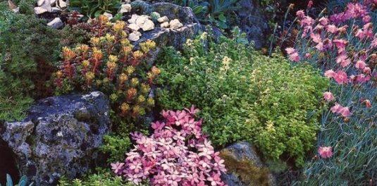 цветы низкорослые многолетники цветущие