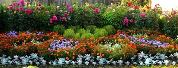 Многолетние цветы для дачи. Каталог цветов, фото с названиями и кратким описанием