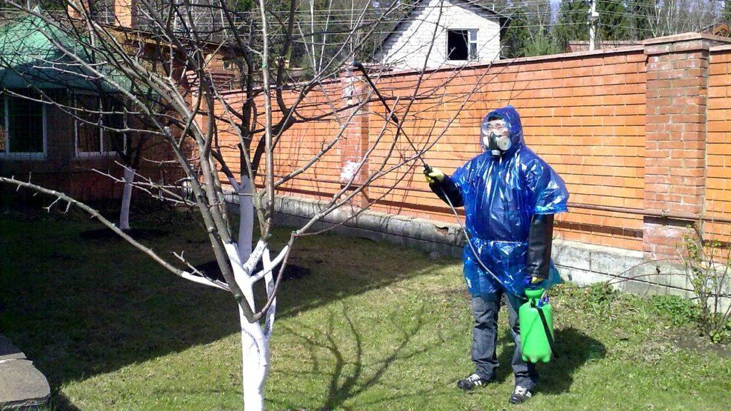 когда весной нужно опрыскивать сад от вредителей
