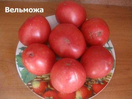 Томат «Вельможа», является детерминантным сортом, который относится к помидорам среднего срока созревания. Интересно, что данный вид, был выведен способом гибридизации, российскими сел