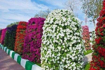 Вертикально расположенная клумба – вариант не для новичков, т.к. ее обустройство требует тщательного подбора цветов,