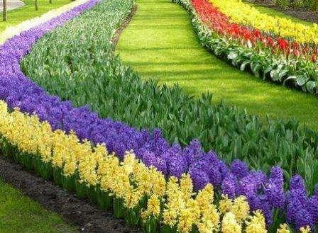 Рабатка – цветник в форме прямоугольника, поверхность которого покрыта растениями одного уровня. Для разнообразия можно выделить некоторые зоны более высокими или более низкими растениями. Также в раб