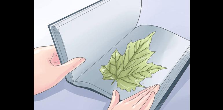 Как сделать осенние поделки самостоятельно