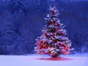 Идеи новогодних игрушек для уличной елки