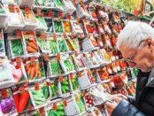 Секреты выбора качественных семян для посадки
