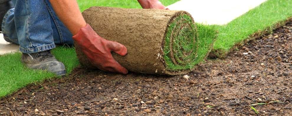 Как засеять газон на даче своими руками 258