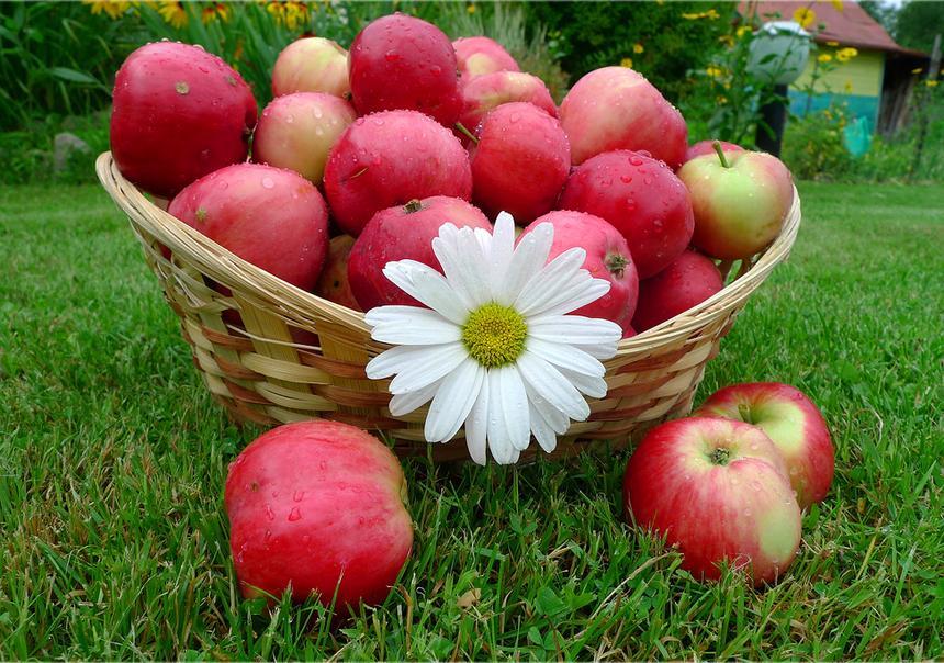 поделки с детьми яблочному спасу