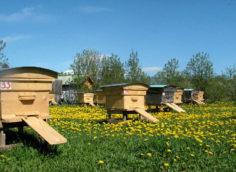 Качественная продукция для пчеловодов от надежного и проверенного поставщика